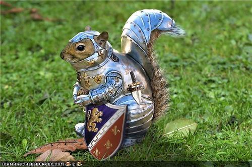 squirrel one