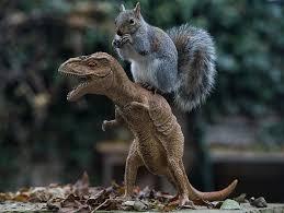 squirrelfour